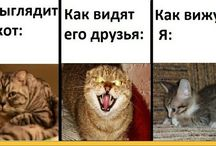 Шуточки про котиков