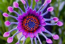 Цветы / Очень красивые цветы