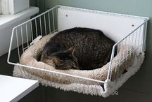 Cat baskets