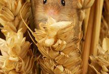 Små mus og rotter
