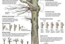 técnicas de plantas