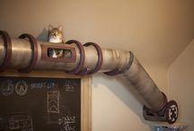 Kot aka Wiewiora