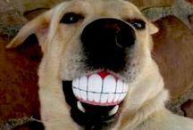 Smiles :) / FuN sMiLeS to make you SMILE!!