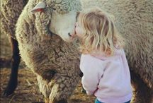 Our Merino Wool Sheep / We are passionate about our wool being ethically sourced, and as such we procure our 100% pure merino wool from South Africa and South America.