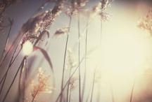 Ethereal Beauty