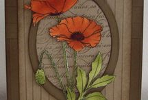 Cards - Floral, Poppies