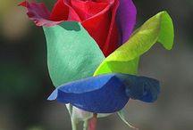 flowers / by Stephanie Lasseigne