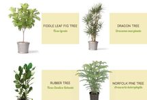 Trees for indoor
