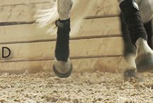 Horse Arena Footing / There are three types of footing additives in use today.  Rubber products, Textiles and fibers, and wood. Within these three basic types of footing additives are a multitude of variations that are suited to different riding disciplines and personal preferences.