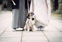 wedding pet / 一緒に祝福してくれるペットたち