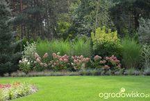 Ogród - nasadzenia kompozycje