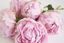 Flowers  / Peonies and pink roses.