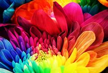 colorful / by Ashleigh Williams