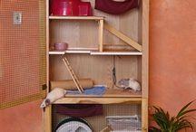 Rat Mansions