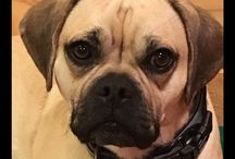Dog Pics & Videos