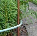 Gardening Tips / Plants & gardening tips