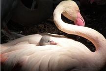 Flamingo / by @Celina8at