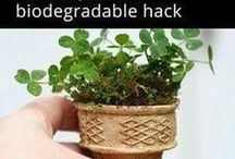 Start plants in small container's (ice cream cones)