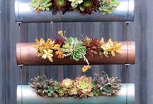 Ideas for succulents