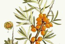 SKINCARE // Flowers & Herbs