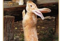 Sweet animals :) / by Tara Wilson