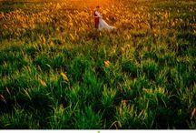 Casamentos em Foz do Iguaçu / Noivos e Noivas de Foz do Iguaçu.