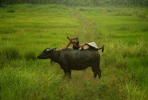 Thailand reizen   Nomad&Villager