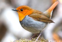 Fåglar (andras bilder)