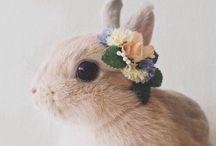 Animals cutie