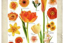 Flower Varieties / Flower identification guide  / by Owens Flower Shop