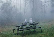 owls / by Joye LaBruyere