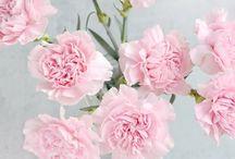 linguaggio diei fiori
