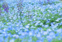 青 BLUE / 青系統のコレクション。  Collection of blue.