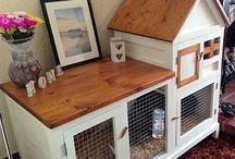 Animals house