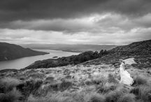 Mt Luxmore Heli-Wedding Fiordland