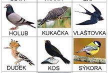 Ptáci, zvířata v zimě