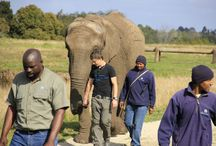 Conservation Volunteering in Africa / Be part of amazing wildlife programs in South Africa,Madagascar, Zimbabwe and Cameroon and help us conserve Africa's wildlife and biodiversity.