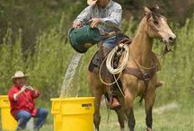 spelletjes paarden