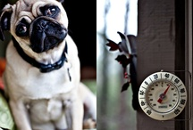 Lovely Dogs / by Marisa Pérez