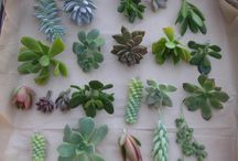 So succulent / All things succulent