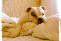 King / My Dog / by Tayna Souza