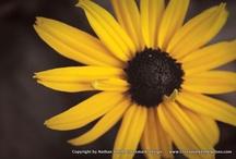 Crossmark Portfolio - Photography / Photography by Nathan Smith, Crossmark Design  -  http://www.crossmarkenterprises.com