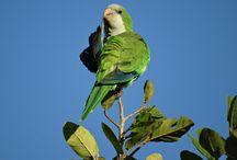 brasil / dieren en nature