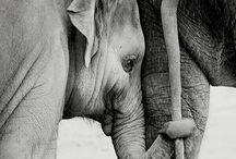 Rettet  die Elefanten
