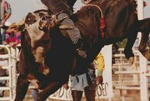 {rodeo}