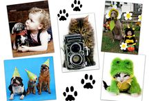 Pet Photo Magnets /  The puuuurrfect announcement and gift.