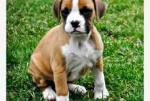 Puppy!!  / by Bridgett Sidwell
