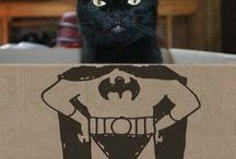 miau.