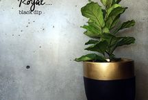 decoracao plantas