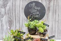 Inspiration Succulents